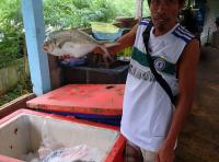 Как выбрать свежий товар на рыбном рынке в Таиланде