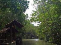 Мангры в деревне Салаккок