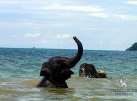 Экскурсия катание и купание на слонах