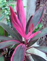Экзотические растения из Таиланда