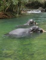День слона в Таиланде