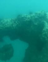 Koh Mak diving